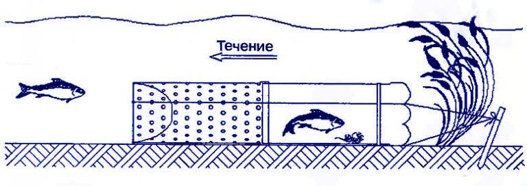 ris 4 shema ustanovki vershi 768x272 - Верши - ловушки